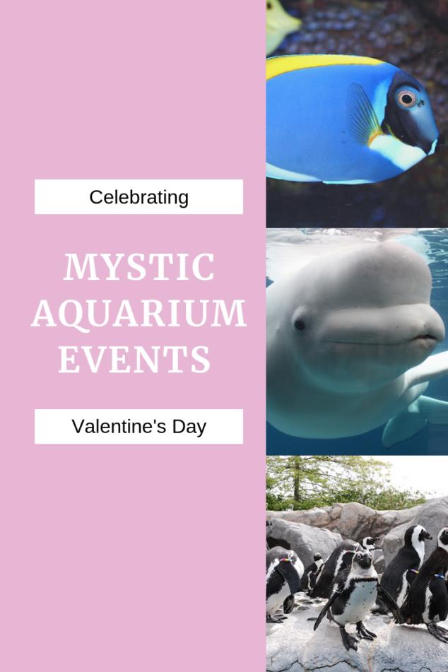 Mystic Aquarium events
