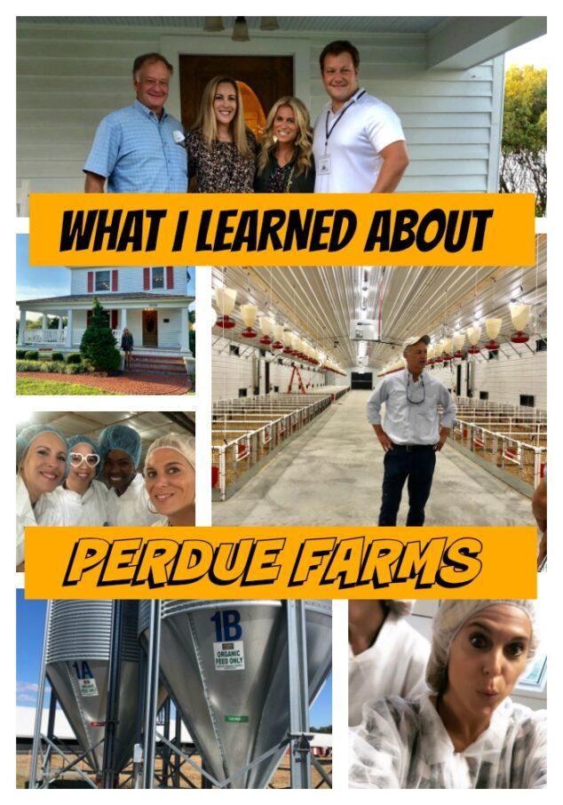 Perdue Farms Experience