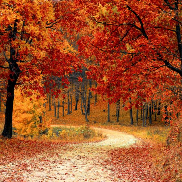 New England Fall Foilage