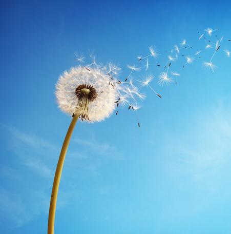 ways to make a wish